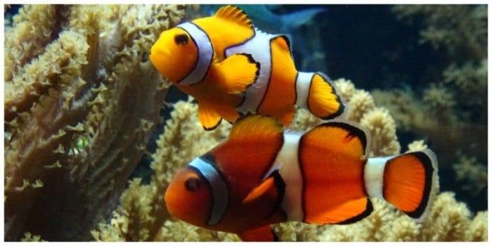Aquarium van Brussel   Op zoek naar Nemo & Dory