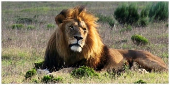 Op zoek naar de Big Five tijdens een rondreis door Zuid-Afrika