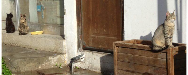 Noord-Cyprus | Een verhaal over poezen en zonneboilers