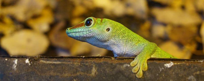 Pairi Daiza, de mooiste dierentuin van heel België – en daarbuiten