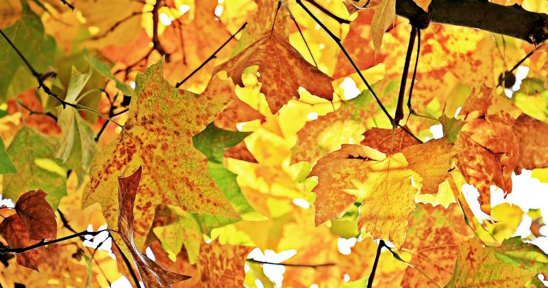 oktober 2019 herfstbladeren