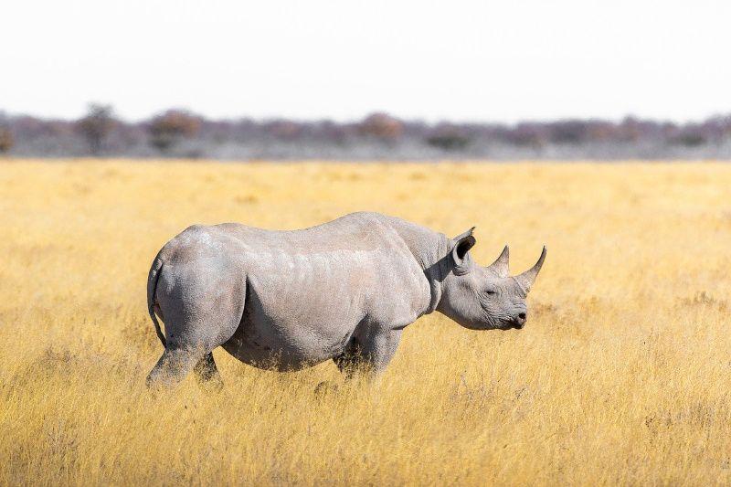 The Africa Experience, reizen naar het échte Afrika
