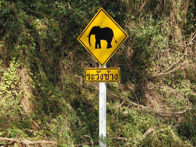 Olifanten bezoeken in Thailand verkeersbord