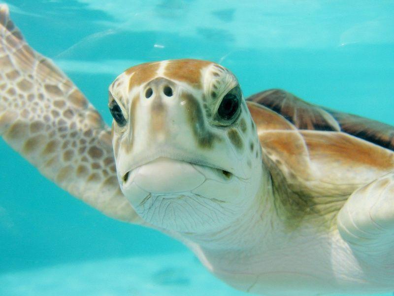mexico schildpad
