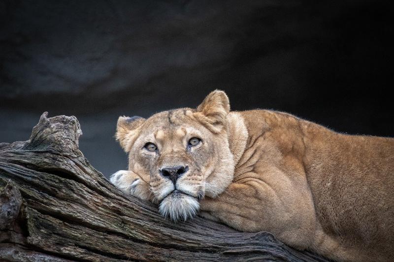 Kendra ging op Afrika Safari Cruise met Croisi Europe
