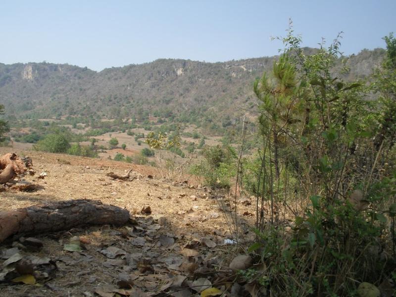 Het reisleed dat verdwaald zijn heet. Lost in the jungle van Myanmar
