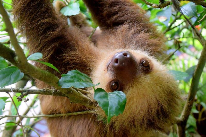 Costa Rica: 5 redenen om deze parel van Midden Amerika te bezoeken