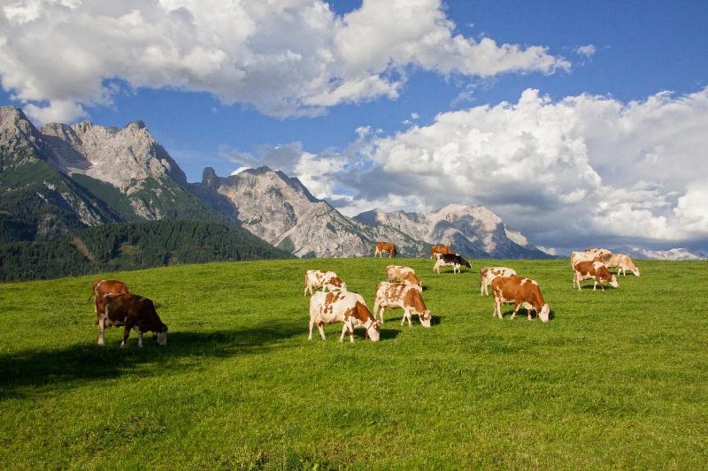 Oostenrijk Alpendreams zomer