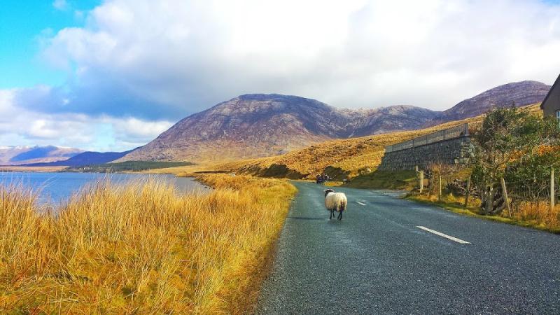 Ierland de ultieme roadtrip. De liefde voor Ierland in een compact boek