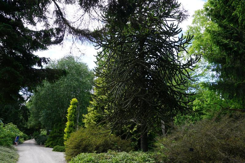 Nationaal-Bomenmuseum-Gimborn-Stichting-Von-Gimborn-Arboretum