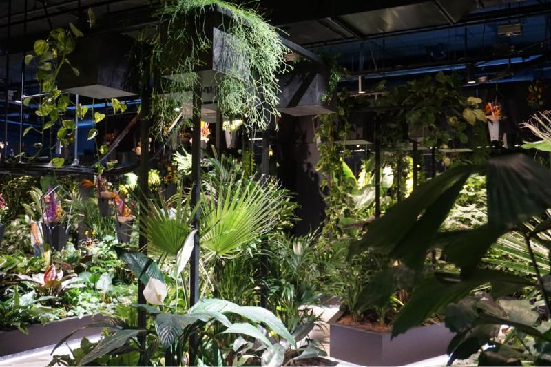 planten groen tuincentrum