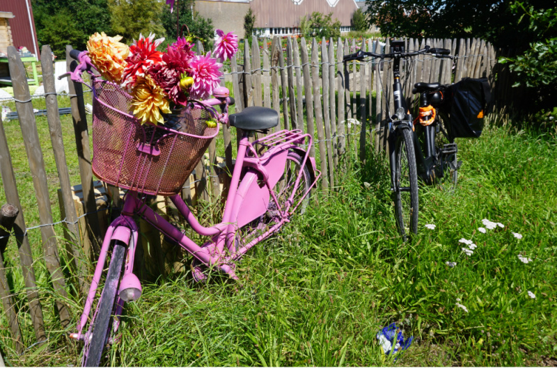 Bloemenstreek, fietsen langs dahlia's, duinen en diverse dorpen