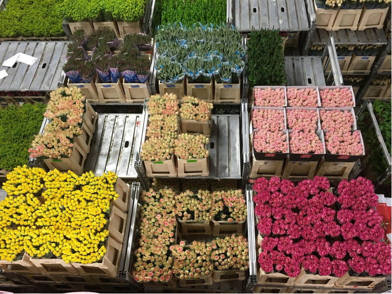 Noord-Holland bloemenveiling Aalsmeer pixabay