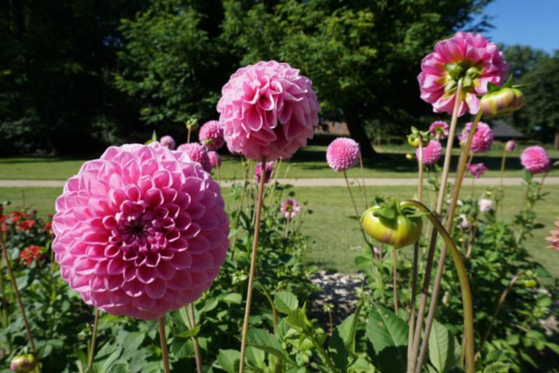 Bloemenstreek Bollenstreek Nederland