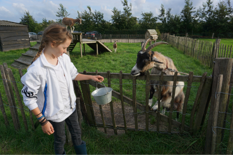 BoerenBed Boerderij de Landhoeve beesten voeren geiten https://www.boerenbed.nl/