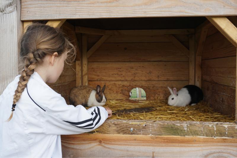 BoerenBed Boerderij de Landhoeve beesten voeren konijnen https://www.boerenbed.nl/