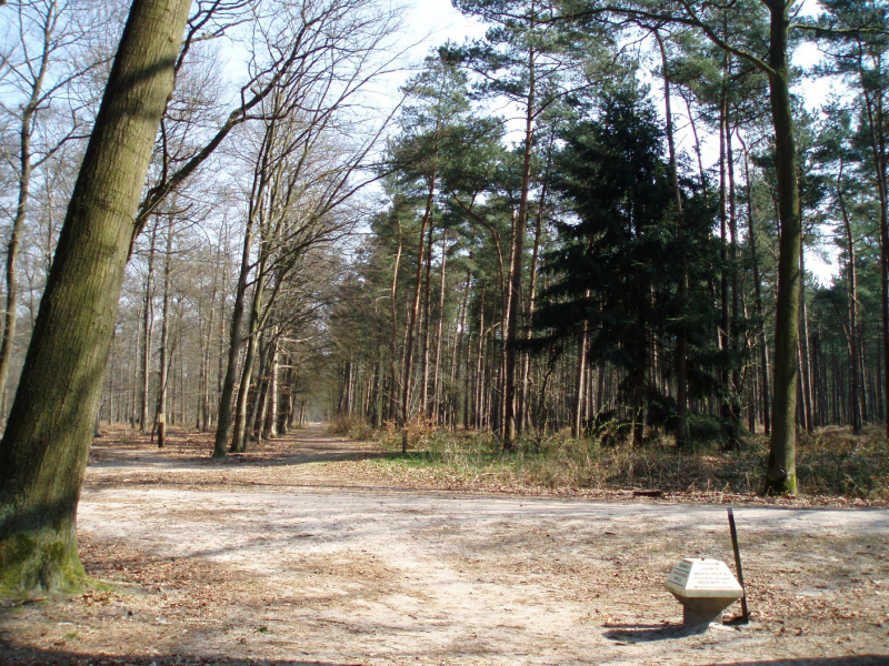 Boswachterspad Mastbos