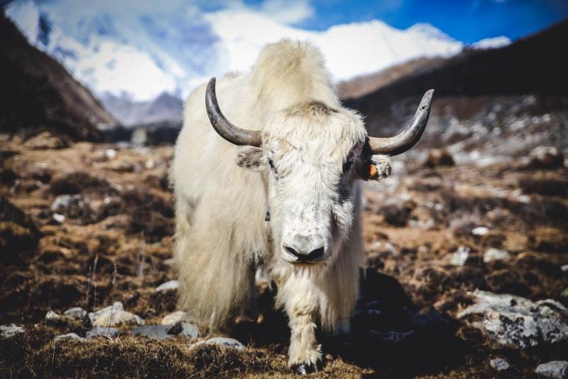himalaya rondreis Nepal