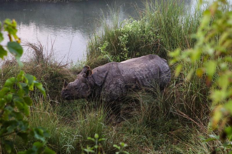 rondreis Nepal Chitwan neushoorn