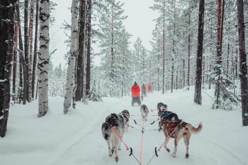 Zweden Zweeds Lapland husky