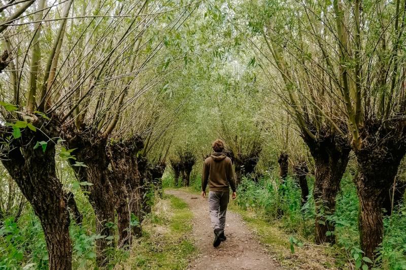 Natuurgebieden in Brabant biesbosch