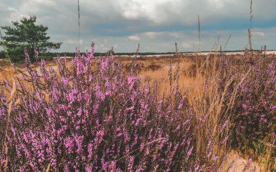 Natuurgebieden in Brabant | Dit zijn de allermooiste!