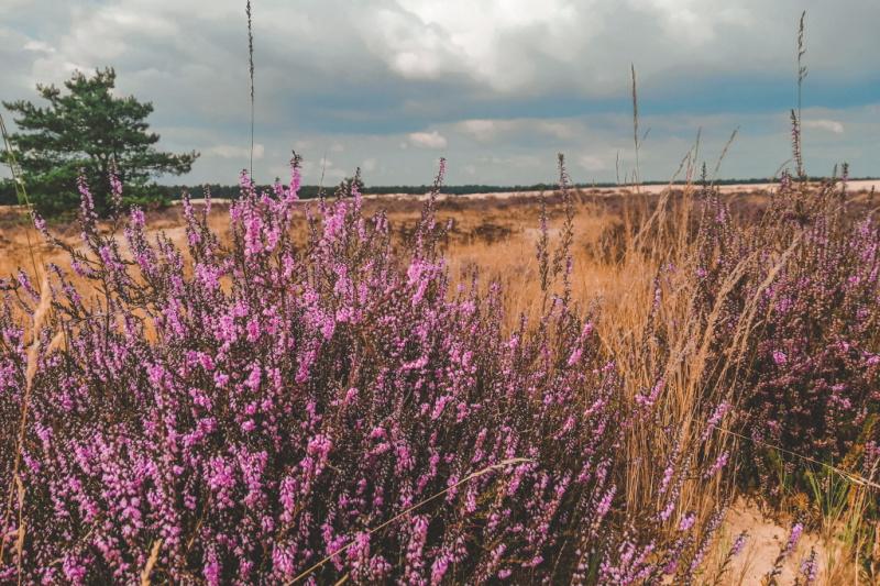 Natuurgebieden in Brabant loonse en drunense duinen