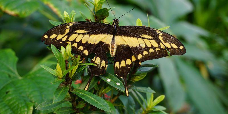 Artis vlindertuin