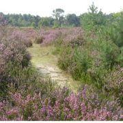 België Kalmthoutse Heide