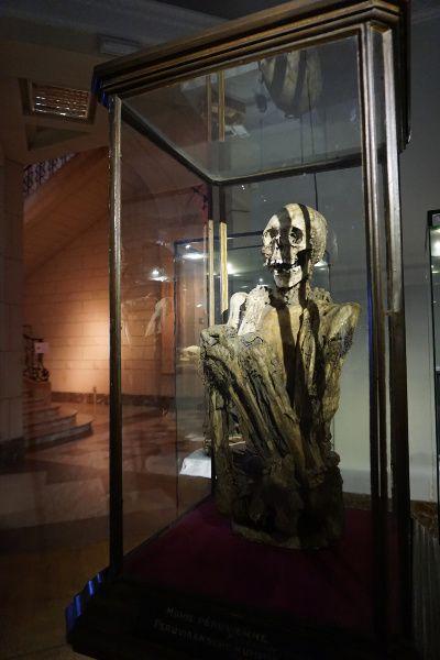 Museum Kunst & Geschiedenis mummie Kuifje