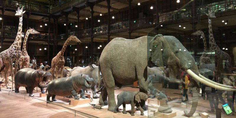 natuurhistorisch museum parijs frankrijk