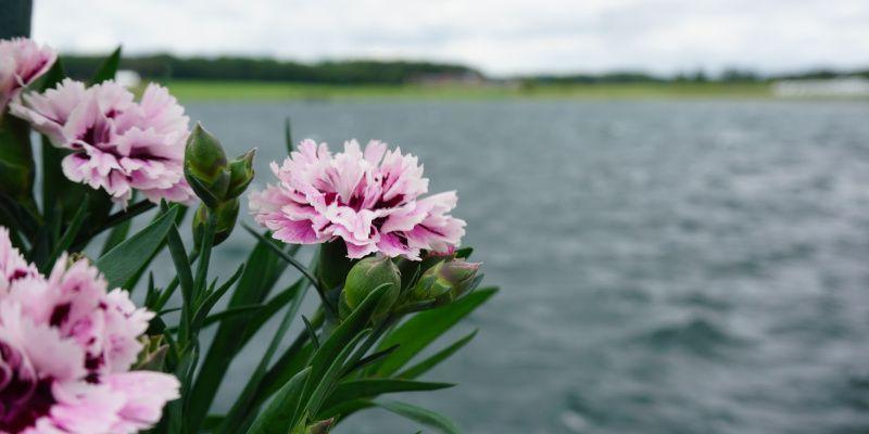Meren van de Eau d'Heure uitzicht met bloemen