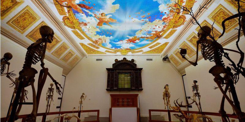 Nederland Leiden Rijksmuseum Boerhaave Anatomisch Theater