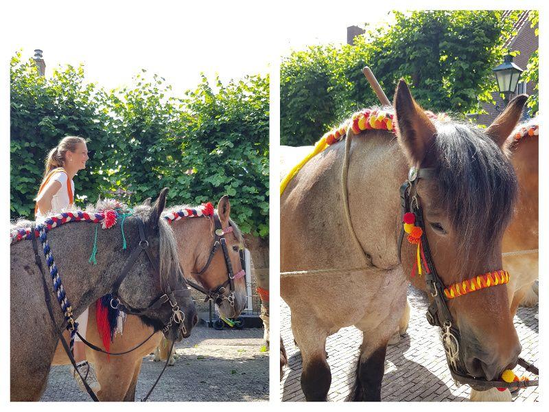 Novasol Vakantiehuis in Zeeland Wemeldinge Ringsteken Trekpaarden