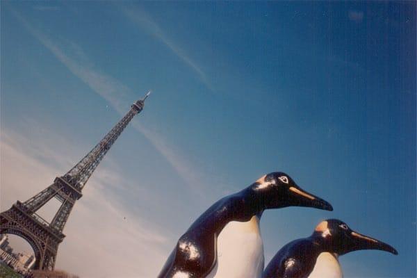 Pinguin-Design Willy Puchner2