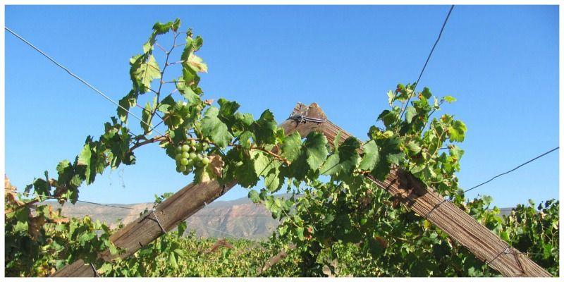 Sable Tours Zuid-Afrika wijn