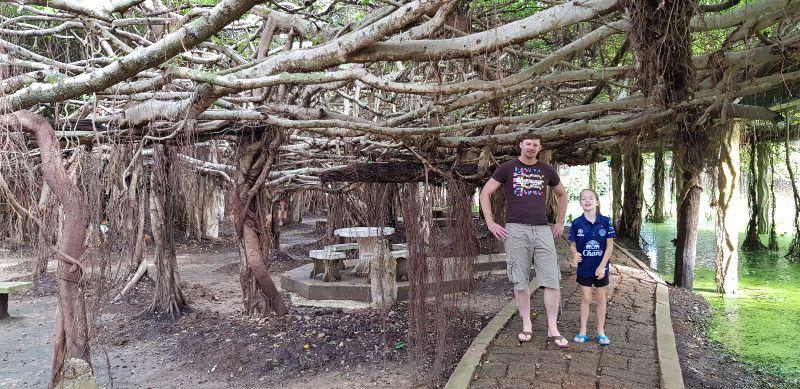 Sai Ngam Banyan Tree Phimai Thailand