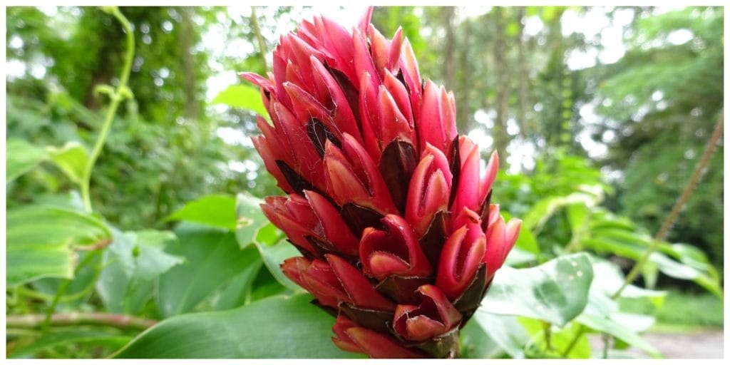 singapore-stereotypen-pulau-ubin-bloem