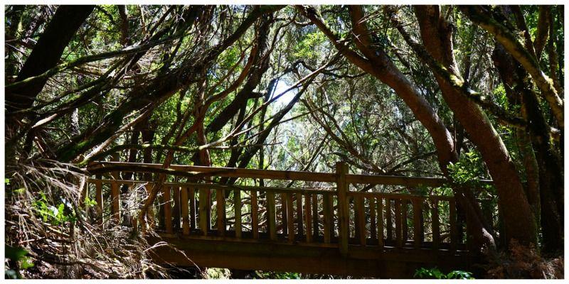 Spanje Tenerife Parque Rural Anaga Pixabay