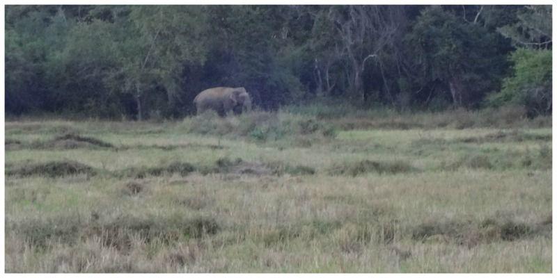 Sri Lanka Wilpattu Wildpark olifant