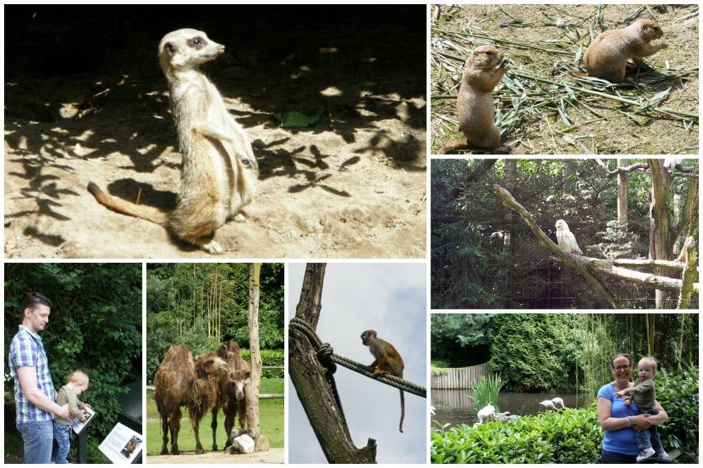 Zoo_parc_Overloon