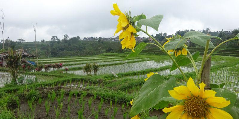 Reisroute Bali – 3 weken met een huurauto het eiland verkennen